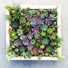 fali virágláda