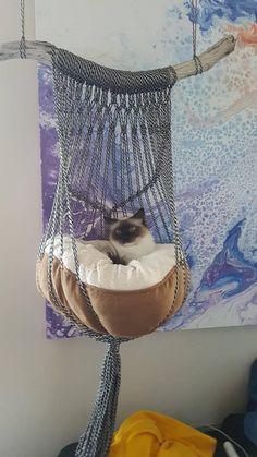 függőágy cicáknal